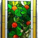 Orange Tree 01.jpg